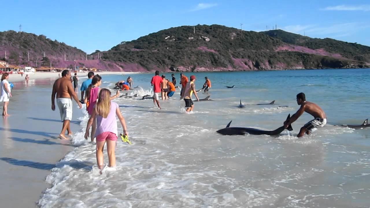 Images très rares - 30 dauphins en danger et sauvés par les témoins du drame
