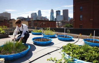 Le jardin aromatique d'un chef sur le toit de l'immeuble à NY