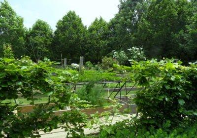 Le jardin façon Jardin de Curé de Michel et Christine Guérard