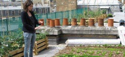 Les chefs cultivent leur jardins-même sur les toits2