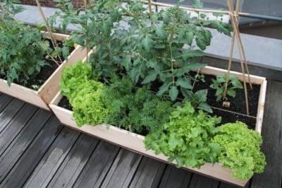 Les chefs cultivent leur jardins m me sur les toits - Que faire avec du marc de cafe dans le jardin ...