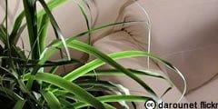 geste-interiorplant