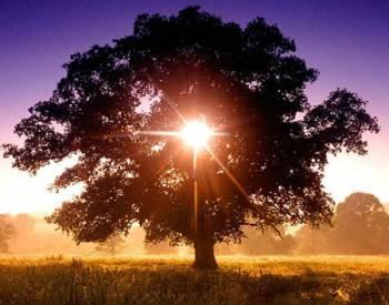 TreeOfLive
