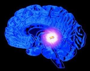 La Glande pinéale ou Troisième oeil- l'importance de détartrer votre glande pinéale