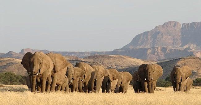 Nous sommes tous reliés-une preuve émouvante-elephants